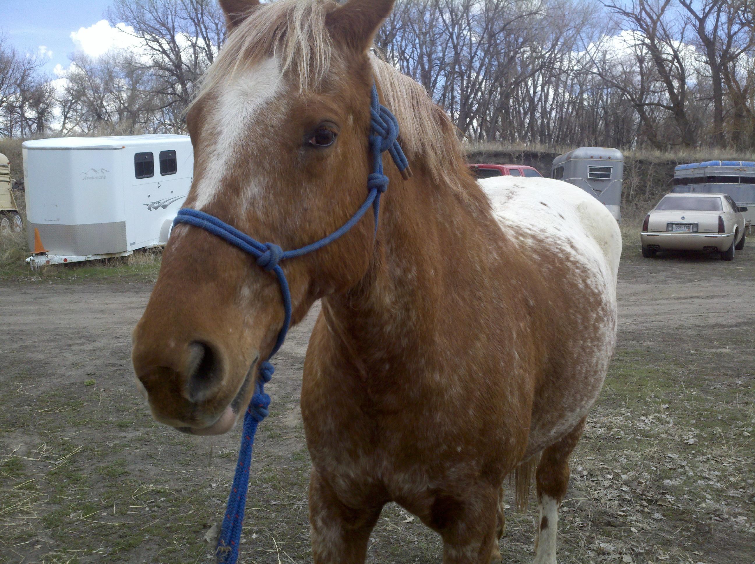 Denver Horse Sitter